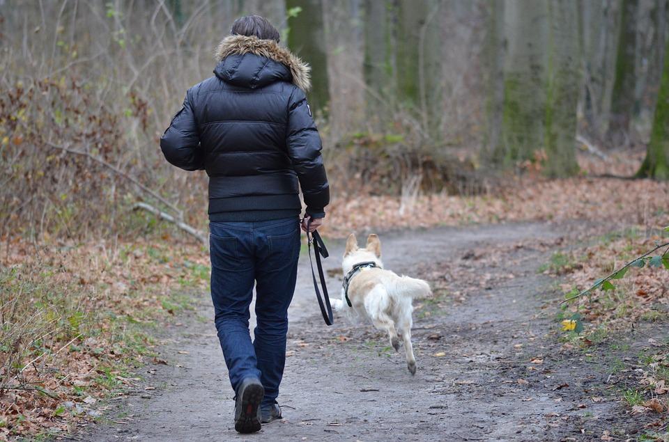 Giv dig selv og din hund frihed